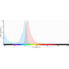 Sun Fluor 488 succinimidyl ester