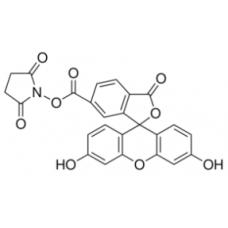 5-Carboxyfluorescein succinimidyl ester